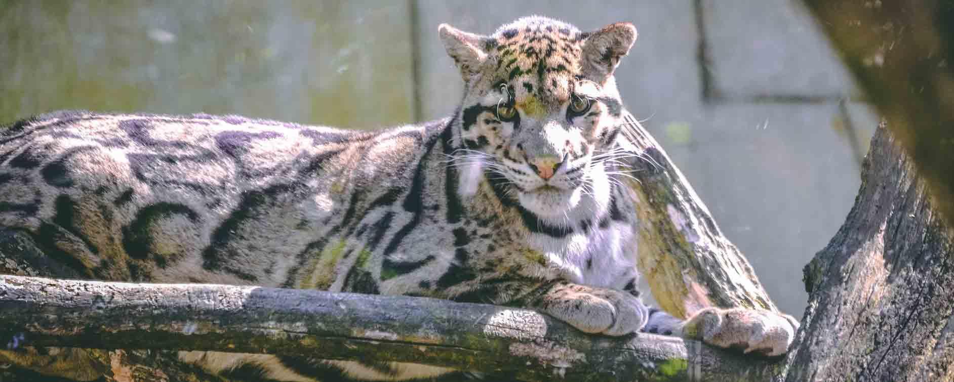 le zoo de pont scorff